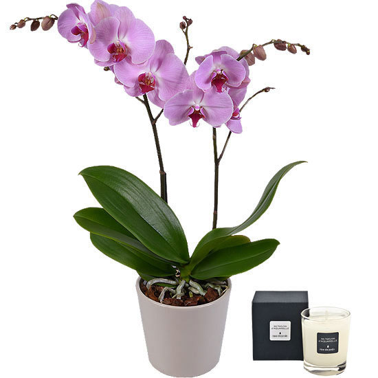 Phalaenopsis et bougie parfumée